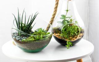 des mini jardins sur mesure aux Ateliers de la Côte à Etoy