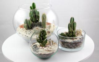 Tinygarden.ch, des mini jardins sur mesure aux Ateliers de la Côte à Etoy